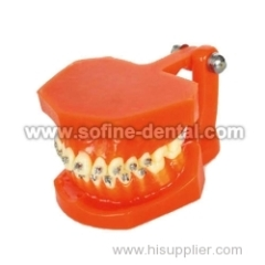 the Dental Teaching Model SF-DE-9010-2
