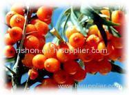 Seabuckthorn Pulp Oil natural