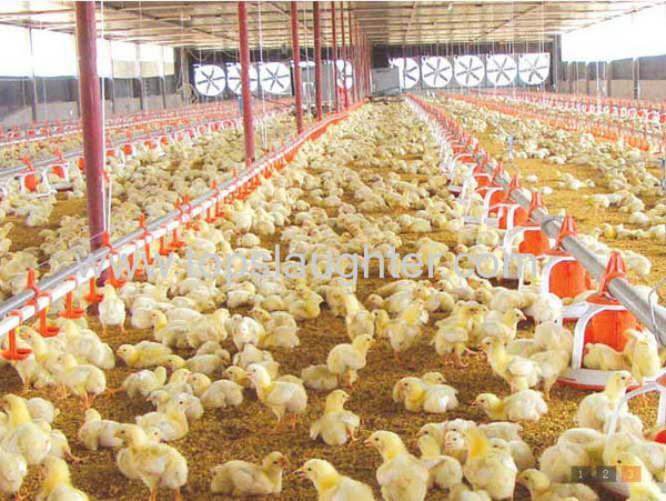 Broiler chicken farm business plan