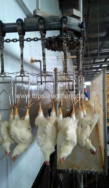 Poultry Water Bath Stunner From China Manufacturer