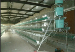Poultry Layer Chicken cage chicken coops poultry cages