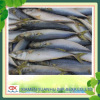 seafood frozen pacific mackerel fish