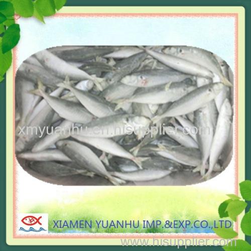 horse mackerel frozen fish seafood