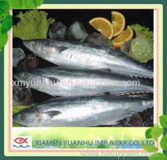 spanish mackerel kingfish frozen mackerel