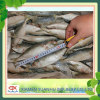 seafood Frozen Indian Mackerel fish