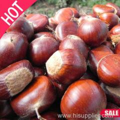 Hot sale Dried Fruit Organic Fresh Chestnut Organic Fruit