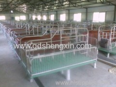 Pig Farm Sow Parto Crate