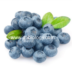 Bilberry Extract Anthocyanins high quality