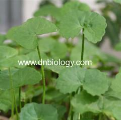 Centella Asiatica Extract Gotu Kola Extract China