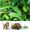 Bacopin Extract Morinda Root Extract Bacopin P.E.Morinda botanical extract