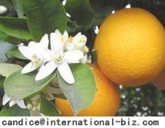 Here are Citrus Aurantium Extract