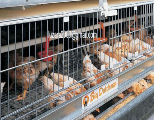 Poultry Farm Chicken Layer cages