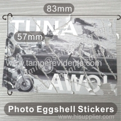 Photo Fragile Eggshell Stickers