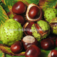Horse Chestnut P.E.Horse Chestnut extract