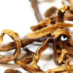 Rhizoma Drynariae P.E.Rhizoma Drynariae extract Rhizoma Drynariae plant extract