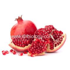 Pomegranate Hull Extract Pomegranate Hull P.E.