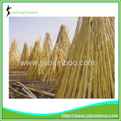 Nature Dry Straight Farming Bamboo Poles for sales