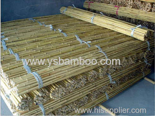 Bamboo stakes for tomatoes