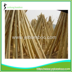 Bamboo stakes and poles