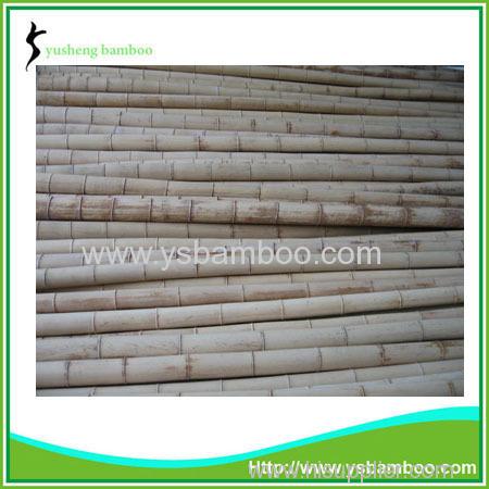 Moso bamboo poles cheap