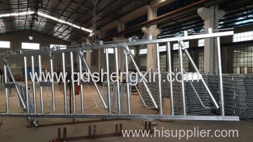5 Cows Cattle Farm Headlocks