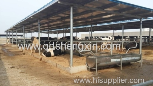 Cattle Farm Cattle Free Stall