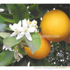Citrus Aurantium Extract powder