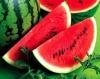 Watermelon powder/ supply kinds of fruit powder