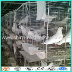 high quality pigeon cage