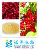 Chinese medicinal herb series/Fructus Schisandra Chinensis