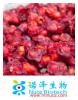 Chinese medicinal herb series/Fructus Schisandra Chinensis/wuweizi/Chinese magnoliavine fruit