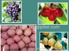 ShanDong Fruits and Vegetable