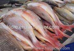 Large Stock Sf Frozen Mackerel Fish Still Available.