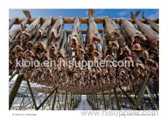 Dried Horse Mackerel Fish Herring Fish Dry Stockfish