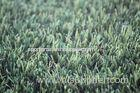 Dtex11600 Home Landscaping Artificial Grass PE PP Waterproof Fake Turf With ISO