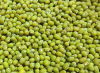 Green mung bean for sale..