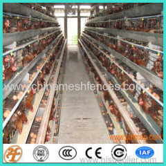 poultry battery farm layer chicken cages