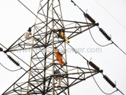 What is the functions of the balls in the high voltage transmission lines?