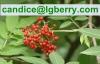 Fruit blend 100% pure elderberry fruit powder