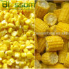 New crop wholesale frozen sweet corn