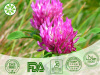Red Clover Extract Red Clover Extract