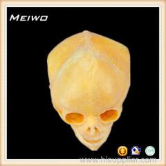 skull of infant real human skulls