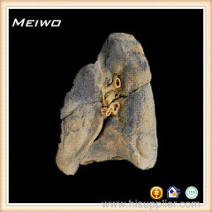 Root of the lung plastination for sale