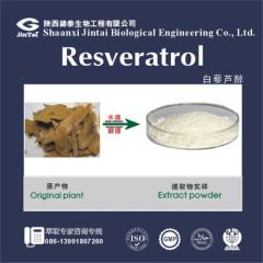 99% HPLC Polygonum Cuspidatum Extract Resveratrol