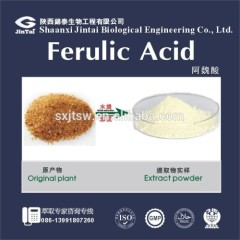 50% Chlorogenic acid organic green coffee bean extract