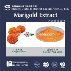 Tagetes erecta Marigold Extract Phylloxanthin / Lutein Powder