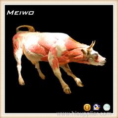 Cow plastination gunther von hagens