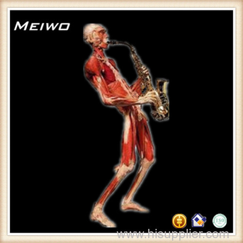 Playing music posture plastinated specimens human