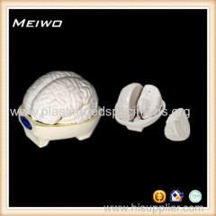 Model of brain 3 parts human anatomy models