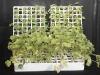 Automatic EPS Polystyrene Molding Machine Produce Seed Tray EPS Seed Tray